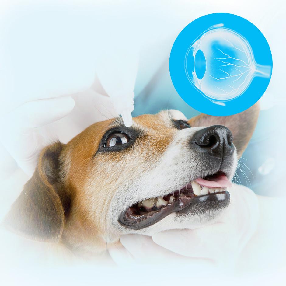 Терапевтическое лечение глазных болезней